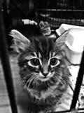 Γάτες Orphaned Στοκ εικόνες με δικαίωμα ελεύθερης χρήσης