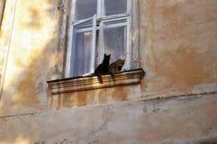 γάτες windowsill Στοκ εικόνα με δικαίωμα ελεύθερης χρήσης