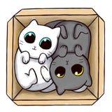 Γάτες Yang Yin μέσα σε ένα κιβώτιο Στοκ φωτογραφία με δικαίωμα ελεύθερης χρήσης