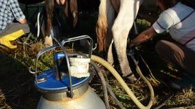 Γάλα αντλιών αρμέγοντας μηχανών απόθεμα βίντεο