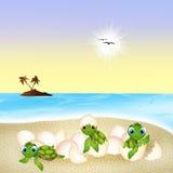 Γέννηση των χελωνών θάλασσας Στοκ Εικόνες