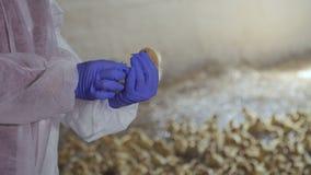 Γένος ελέγχου της Farmer του νεοσσού φιλμ μικρού μήκους