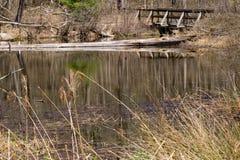 Γέφυρα για πεζούς πέρα από ένα δασόβιο έλος, κομητεία του Craig, Βιρτζίνια, ΗΠΑ Στοκ Φωτογραφίες