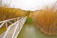 Γέφυρα για πεζούς πέρα από μια λίμνη υγρότοπου Στοκ εικόνες με δικαίωμα ελεύθερης χρήσης