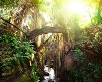 Γέφυρα λιονταριών Barong στον πίθηκο δασικό Μπαλί, Ινδονησία Στοκ φωτογραφίες με δικαίωμα ελεύθερης χρήσης