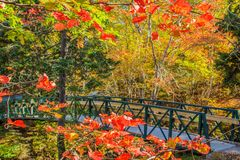 Γέφυρα κατά μήκος του ίχνους περπατήματος πάρκων Shubie Στοκ φωτογραφία με δικαίωμα ελεύθερης χρήσης