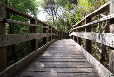 Γέφυρα κατά τη χαμηλή άποψη ξύλων Στοκ φωτογραφία με δικαίωμα ελεύθερης χρήσης