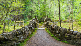 Γέφυρα μέσα στο δάσος Στοκ εικόνες με δικαίωμα ελεύθερης χρήσης