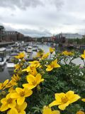 Γέφυρα λουλουδιών του Τρόντχαιμ Στοκ φωτογραφία με δικαίωμα ελεύθερης χρήσης