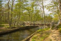 Γέφυρα πέρα από το δασικό ρεύμα Στοκ εικόνες με δικαίωμα ελεύθερης χρήσης