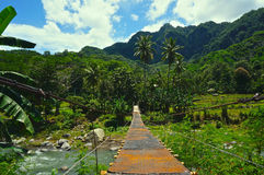 Γέφυρα περιπέτειας στη φύση στοκ εικόνα με δικαίωμα ελεύθερης χρήσης