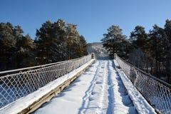 Γέφυρα πεύκων και αναστολής στον ποταμό Katun Στοκ Φωτογραφία
