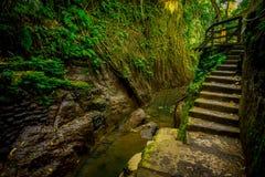 Γέφυρα δράκων δασικό άδυτο πιθήκων Ubud στο ιερό, μια επιφύλαξη φύσης και έναν ινδό ναό σύνθετους σε Ubud, Μπαλί, Ινδονησία Στοκ Φωτογραφία