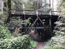 Γέφυρα στα δάση Στοκ Εικόνες