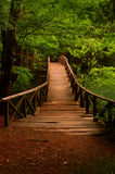 Γέφυρα στη ζούγκλα επτά λίμνη Bolu Τουρκία Στοκ Εικόνες