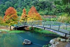 Γέφυρα στο δάσος φθινοπώρου Στοκ Εικόνες