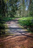 Γέφυρα στο δάσος Στοκ Εικόνες
