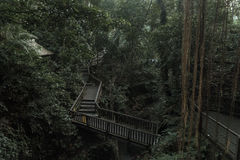 Γέφυρα στο δασικό άδυτο πιθήκων Ubud ` s με το τεράστιο παλαιό δέντρο με τις ρίζες κούτσουρων και τους κλάδους, Μπαλί, Ινδονησία Στοκ Εικόνα