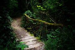 Γέφυρα στο ξύλο Στοκ Εικόνες