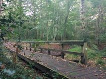 Γέφυρα στο Forrest Στοκ Εικόνες