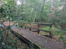 Γέφυρα στο Forrest Στοκ Φωτογραφίες