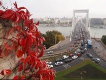 Γέφυρα της Elizabeth Στοκ εικόνα με δικαίωμα ελεύθερης χρήσης
