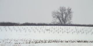 Γέφυρα χιονιού στοκ φωτογραφία με δικαίωμα ελεύθερης χρήσης