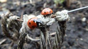 Γέφυρα Ladybug στοκ φωτογραφία με δικαίωμα ελεύθερης χρήσης