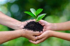 Γήινη ημέρα περιβάλλοντος δέντρων χεριών μωρών ενηλίκων στα χέρια των δέντρων που αυξάνεται τα σπορόφυτα Bokeh πράσινη εκμετάλλευ στοκ εικόνα με δικαίωμα ελεύθερης χρήσης