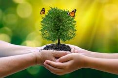 Γήινη ημέρα περιβάλλοντος στα χέρια των δέντρων που αυξάνεται τα σπορόφυτα Bokeh πράσινο δέντρο εκμετάλλευσης χεριών υποβάθρου θη στοκ εικόνες