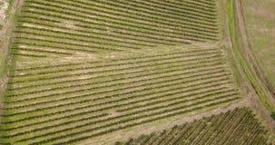 Γήινη ` s γραμμή Μια κάθετη προοπτική κηφήνων των αμπελώνων γεωργικά πεδία φιλμ μικρού μήκους