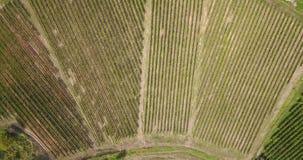 Γήινη ` s γραμμή Μια κάθετη προοπτική κηφήνων των αμπελώνων γεωργικά πεδία απόθεμα βίντεο