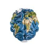 Γήινος εγκέφαλος Στοκ φωτογραφίες με δικαίωμα ελεύθερης χρήσης