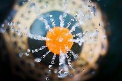 Γήινο βάζο πηγών στον κήπο Στοκ Φωτογραφίες