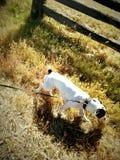 Γήινο σκυλί στοκ φωτογραφία με δικαίωμα ελεύθερης χρήσης