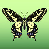 γίγαντας πεταλούδων Στοκ φωτογραφία με δικαίωμα ελεύθερης χρήσης