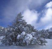 Γίγαντας χιονιού Στοκ φωτογραφίες με δικαίωμα ελεύθερης χρήσης