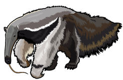 Γίγαντας anteater απεικόνιση αποθεμάτων