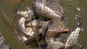 Γίνοντας ερχόμενος κάτω από το υπόλοιπο που αλιεύει στα σπίτια καλάμω φιλμ μικρού μήκους