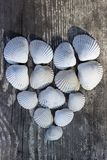 γίνοντα καρδιά κοχύλια θάλασσας Στοκ Φωτογραφίες
