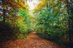 γίνοντη φωτογραφία Πολωνία μονοπατιών φθινοπώρου δάσος Στοκ Εικόνες