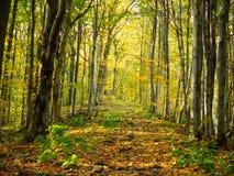 γίνοντη φωτογραφία Πολωνία μονοπατιών φθινοπώρου δάσος Στοκ εικόνα με δικαίωμα ελεύθερης χρήσης