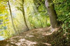 γίνοντη φωτογραφία Πολωνία μονοπατιών φθινοπώρου δάσος Στοκ Εικόνα