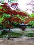 γαλήνια άνοιξη της Κορέας Στοκ Φωτογραφία