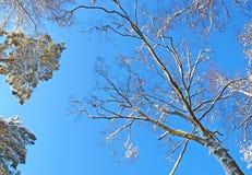 γαλήνιος χειμώνας ημέρας στοκ φωτογραφία με δικαίωμα ελεύθερης χρήσης