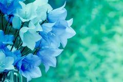 Γαλαζοπράσινα εκλεκτής ποιότητας λουλούδια harebell Στοκ Φωτογραφίες