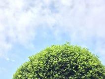 γαλαζοπράσινο δέντρο ουρανού Στοκ φωτογραφίες με δικαίωμα ελεύθερης χρήσης