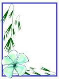 Γαλαζωπά πράσινα σύνορα Plumeria Στοκ Εικόνες