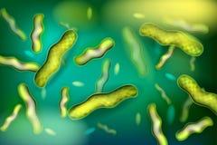 Γαλακτοβάκιλλος βακτηριδίων διάνυσμα ελεύθερη απεικόνιση δικαιώματος