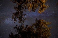 Γαλακτώδης τρόπος επάνω από την κορώνα των δέντρων στοκ φωτογραφία με δικαίωμα ελεύθερης χρήσης